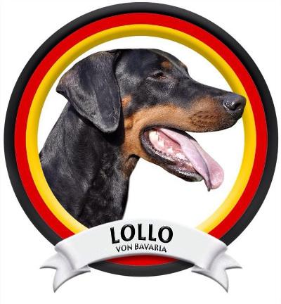 ENCI-2 Prüfung Lollo von Bavaria